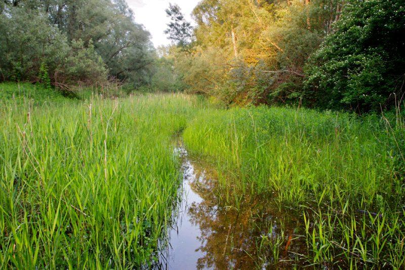 rivers, floodplain, flooded forest, flood, drava, reed, sedge