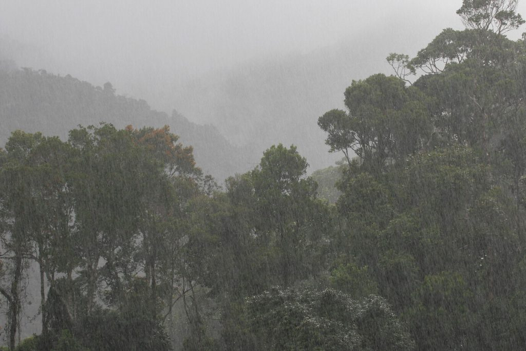 Ranomafana National Park, madagascar, Ranomena River, mountain, cloud forest, jungle, downpour, shower