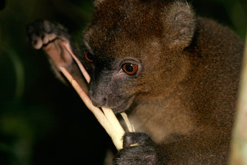 Ranomafana National Park, madagascar, Ranomena River, mountain, cloud forest, jungle, arboreal, lemur