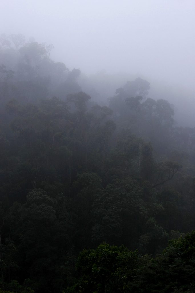 Ranomafana National Park, madagascar, Ranomena River, mountain, cloud forest, jungle, fog, mist