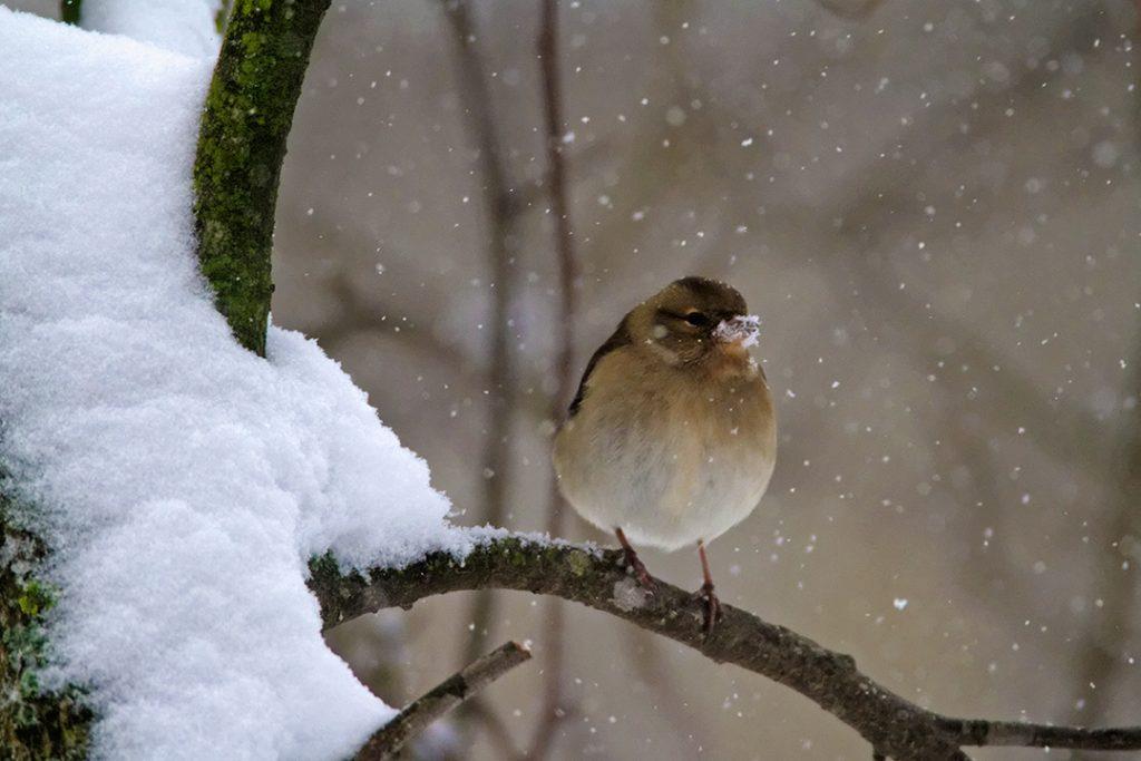 birds, winter, snow