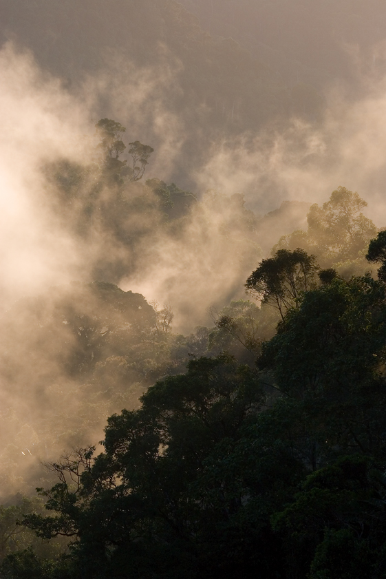 Ranomafana National Park, madagascar, Ranomena River, mountain, cloud forest, jungle, sunrise, mist
