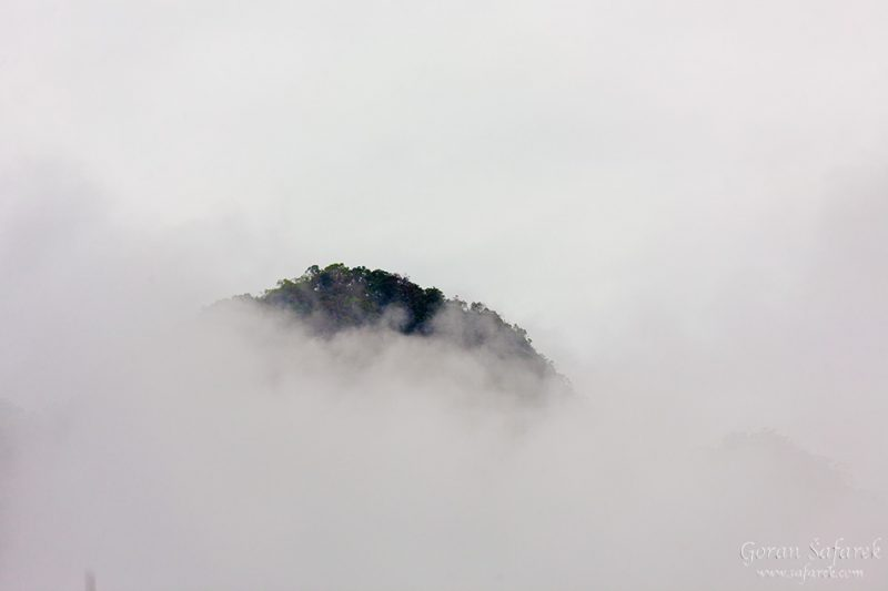 Khao sok, national park, asia, thailand, jungle, rainforest, tropical, rain, fog, mist, trees