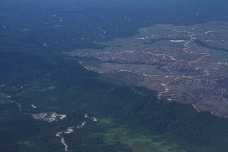 Mulu National Park, Borneo, Malaysia, rainforest, jungle, deforestation