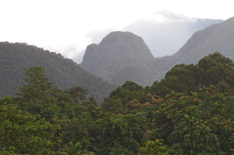 Mulu National Park, Borneo, Malaysia, rainforest, jungle, rain, downpour