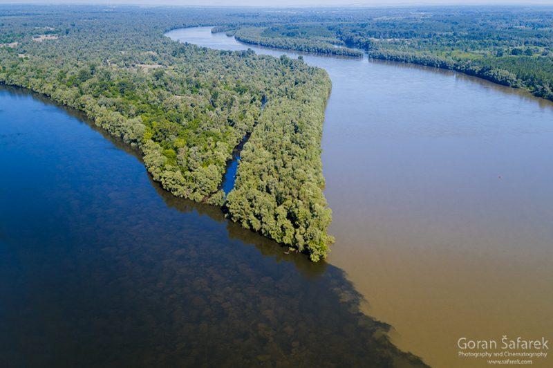 Drava, Danube, confluence, kopački rit, floodplain, forest