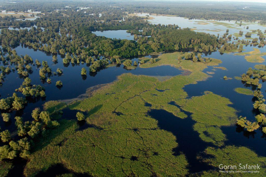 danube, floodplain, river, croatia, forest, flood