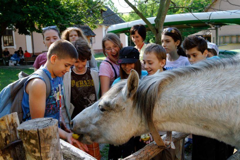 Children, Zlatna Greda, Croatia, horse