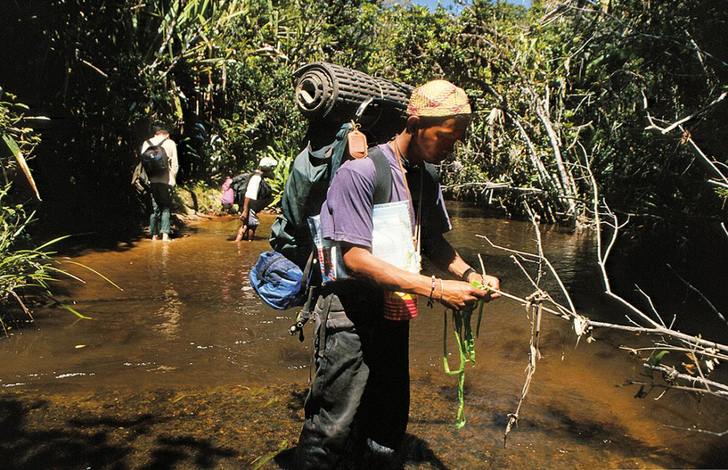 madagascar, šafarek, ranomafana, rivers, national parks, ranomena, jungle, rainforest,