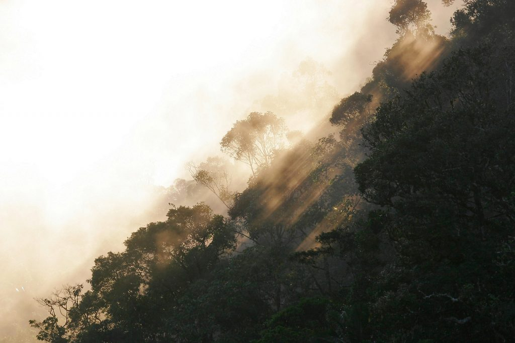 madagascar, šafarek, ranomafana, rivers, national parks, ranomena, jungle, rainforest, mist, morning, sunrise
