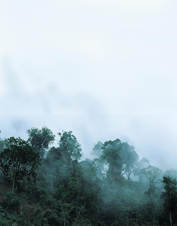 madagascar, šafarek, ranomafana, rivers, national parks, ranomena, jungle, rainforest,mist, fog