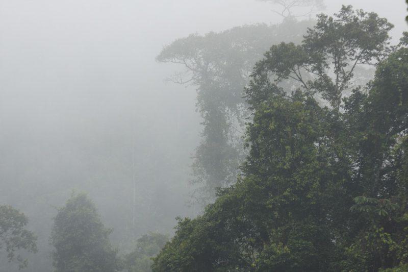 ecuador, macas, shuar, indian, village, amazon, jungle, oriente