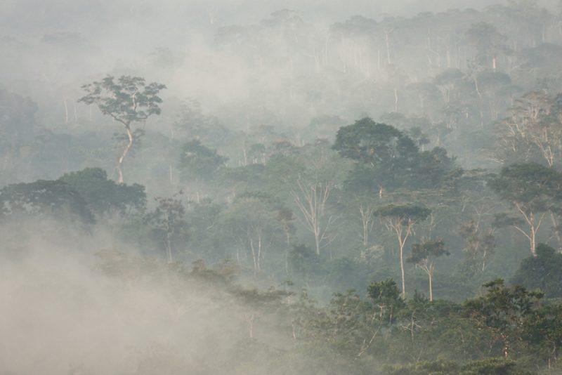 ecuador, anzu, shangrila, rio, rivers, amazon, lodge, ecotourism, andes, jungle,