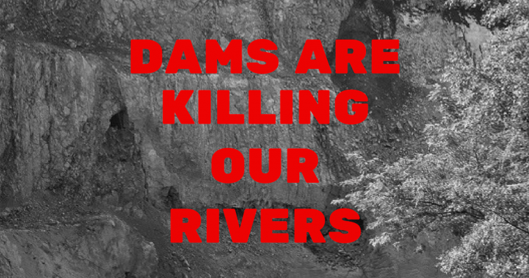 Dams are killing our rivers!