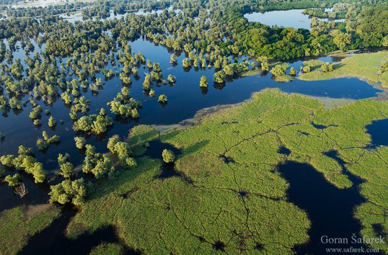 rivers, flood, flooding, damage, nature, management, protection, Kopački rit, croatia, danube