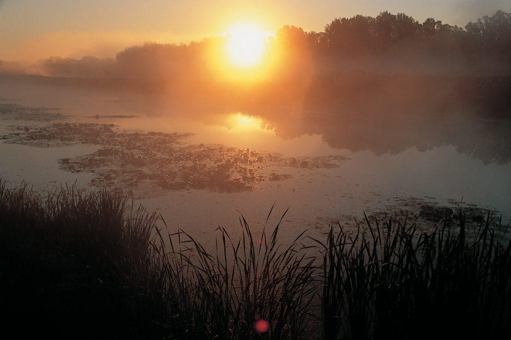 oxbow lake, backwatermarsh,wetland