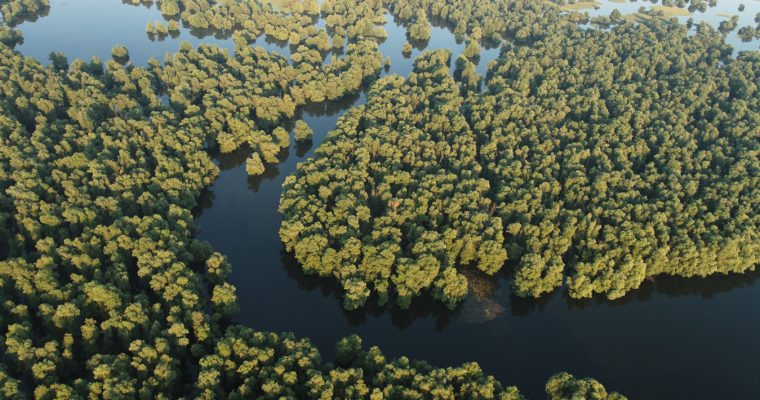 Flooded forests (swamp forests)