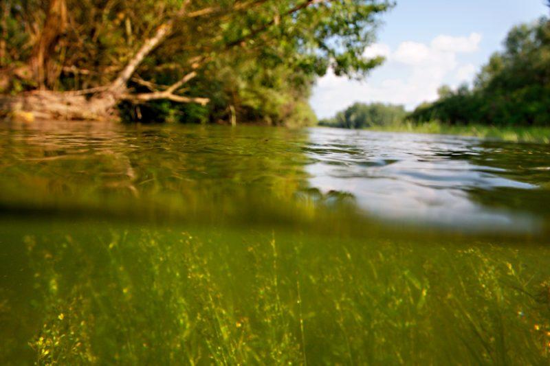 rivers, floodplain, flooded forest, flood, drava