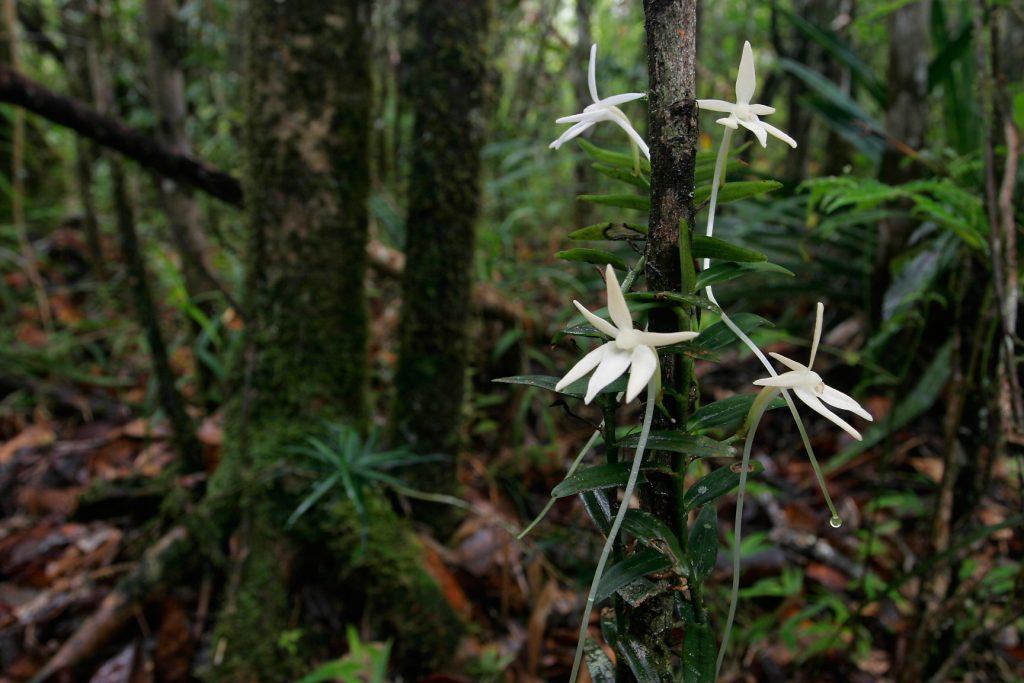 Ranomafana National Park, madagascar, Ranomena River, mountain, cloud forest, jungle, arboreal, orchid