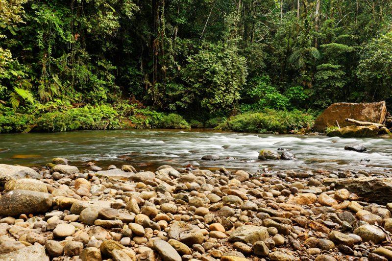 Zanja Arajuno, Andes, foothills, ecuador, rainforest, tropical, puyo,