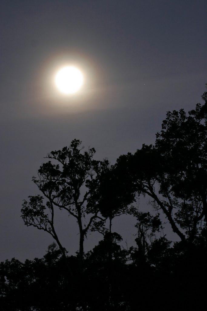 Ranomafana National Park, madagascar, Ranomena River, mountain, cloud forest, jungle, moon