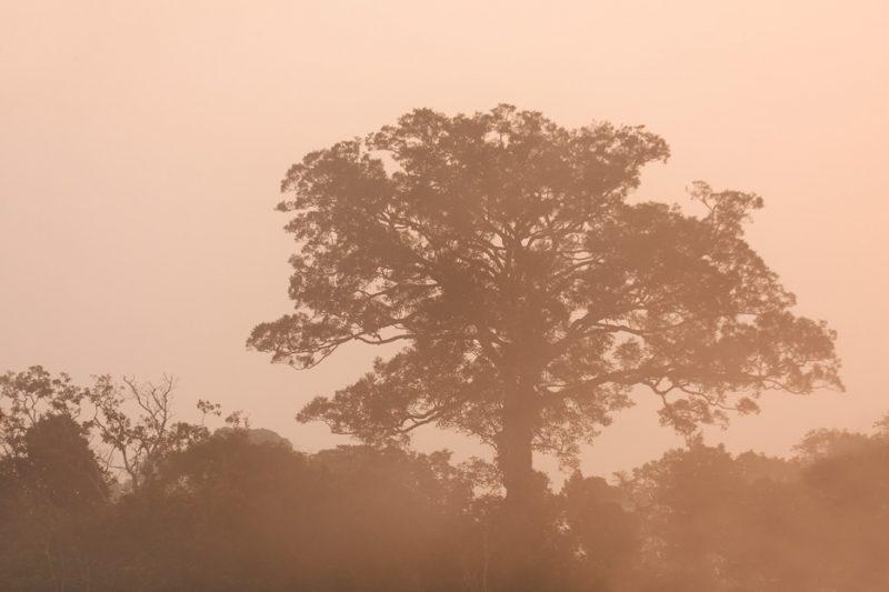 The Tiputini River, Yasuní National Park, ecuador jungle, rainforest, oriente, tropical, sunrise