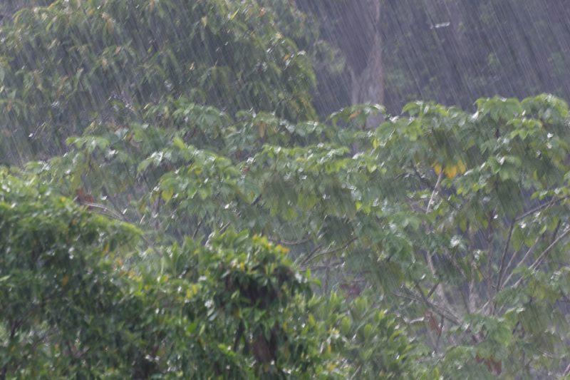 The Tiputini River, Yasuní National Park, ecuador jungle, rainforest, oriente, tropical, rain, downpour, shower