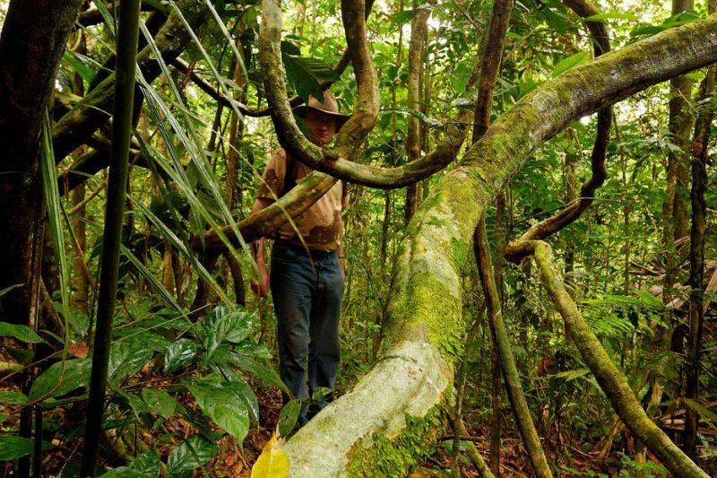 The Tiputini River, Yasuní National Park, ecuador jungle, rainforest, oriente, tropical, sunrise, liana, vine