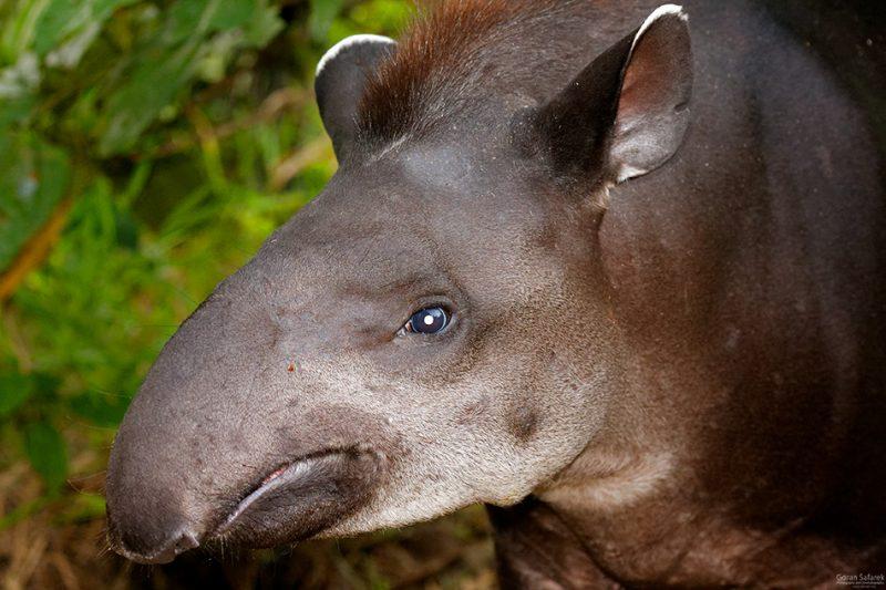 The Tiputini River, Yasuní National Park, ecuador jungle, rainforest, oriente, tropical, tapir