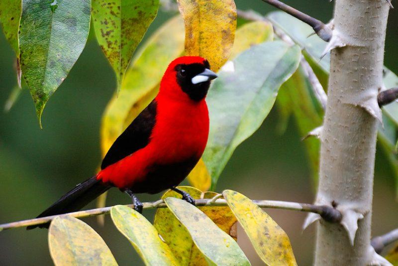 The Tiputini River, Yasuní National Park, ecuador jungle, rainforest, oriente, tropical, sunrise, bird