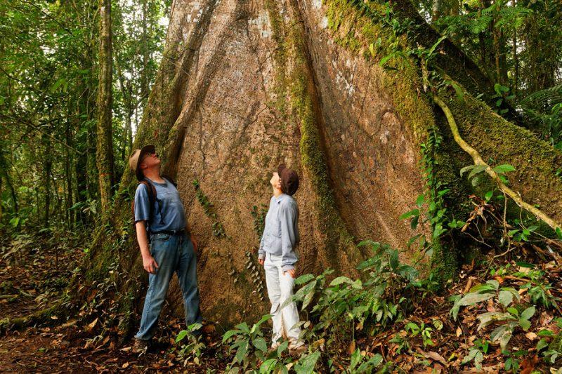 butress roots, tree, The Tiputini River, Yasuní National Park, ecuador jungle, rainforest, oriente, tropical,