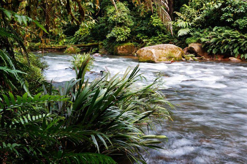 Zanja Arajuno, Andes, foothills, ecuador, rainforest, tropical, puyo, rapids