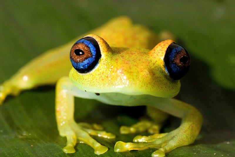 Ranomafana National Park, madagascar, Ranomena River, mountain, cloud forest, jungle, frog