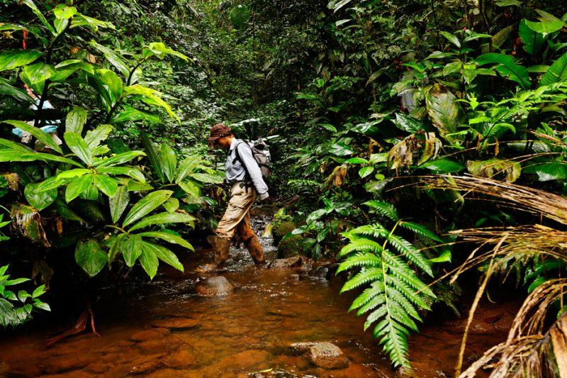 Zanja Arajuno, Andes, foothills, ecuador, rainforest, tropical, puyo, biologist, exploration, research