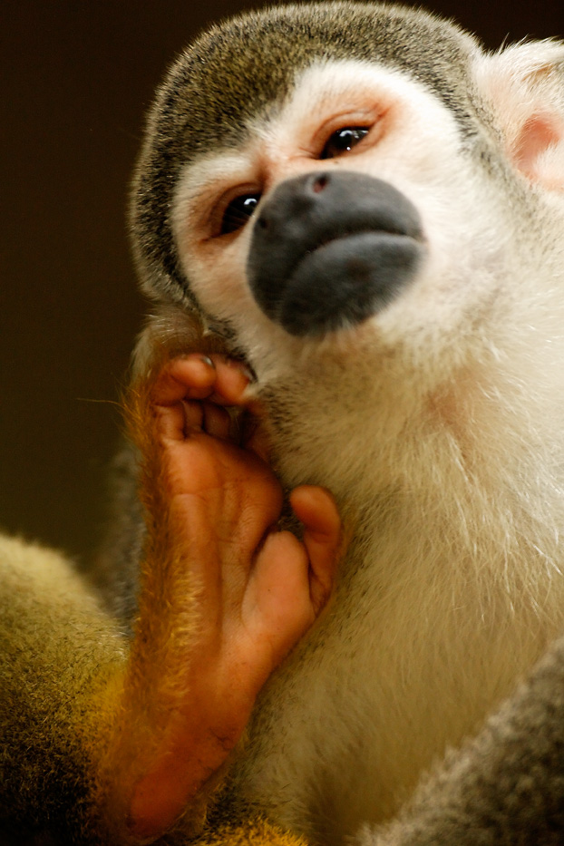 Zanja Arajuno, Andes, foothills, ecuador, rainforest, tropical, puyo, squirrel monkey