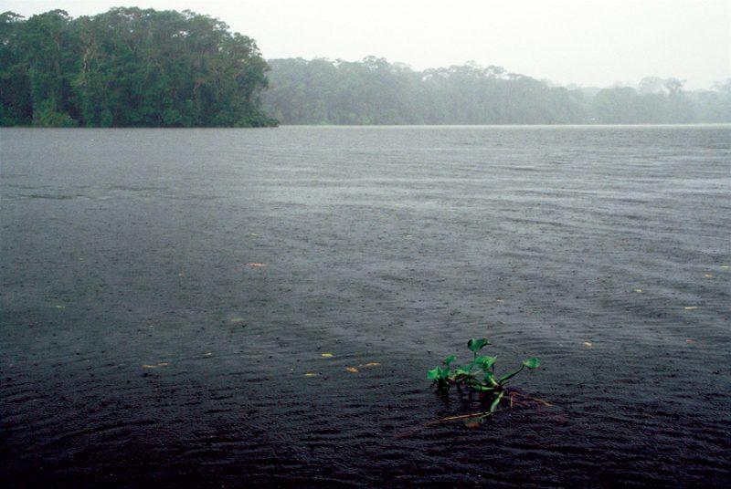 Tortuguero , costa rica, rain, downpour