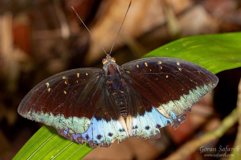 Khao sok, national park, asia, thailand, jungle, rainforest, tropical, butterfly