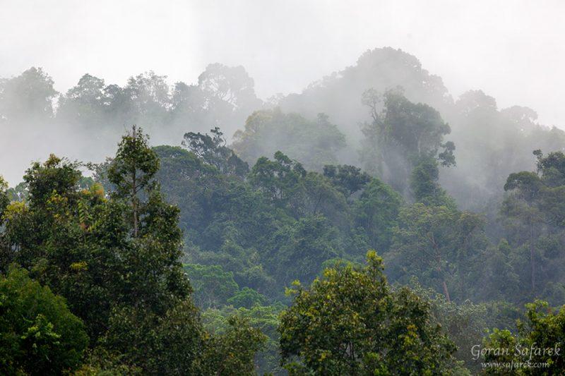 Khao sok, national park, asia, thailand, jungle, rainforest, tropical, rain, fog, mist, trees