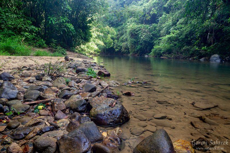 Khao sok, national park, asia, thailand, jungle, rainforest, tropical, river