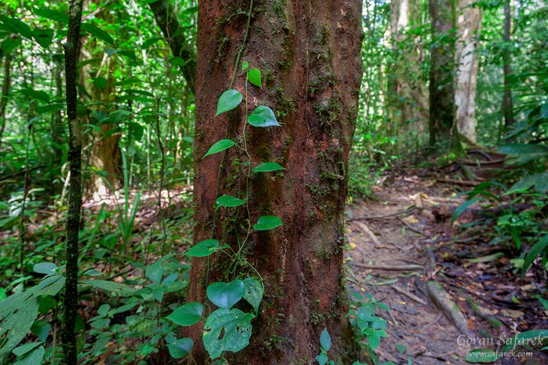 Khao sok, national park, asia, thailand, jungle, rainforest, tropical, trees