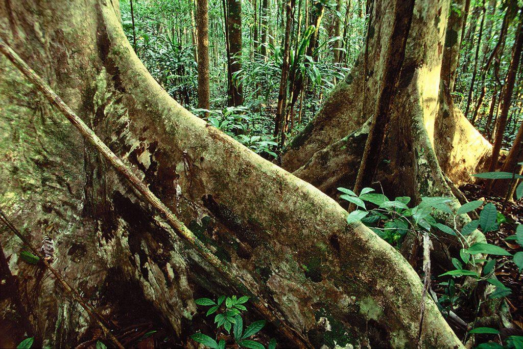 Masoala, madagascar, jungle, rainforest