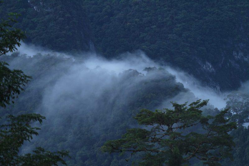 Mulu National Park, Borneo, Malaysia, rainforest, jungle